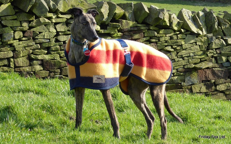 Witney Greyhound and Lurcher Coat