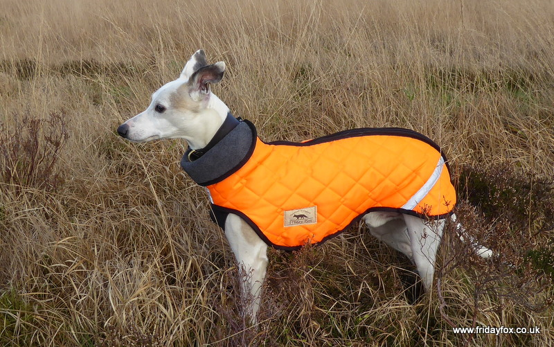 Orange Whippet Puffer Jacket