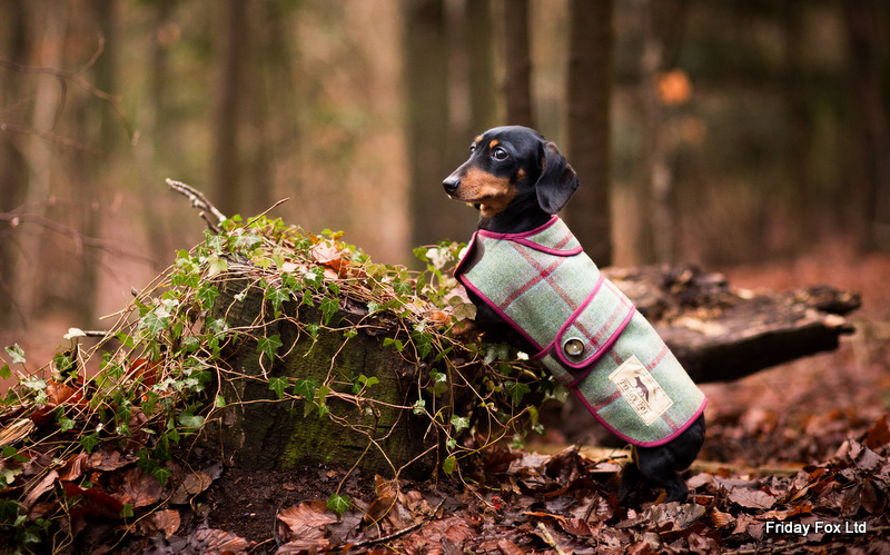 Tweed & Moleskin Miniature Dachshund Coat