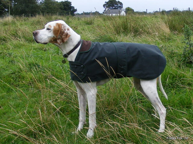 Wax Cotton Dog Coats For Pointers, Vizslas and Weimaraners