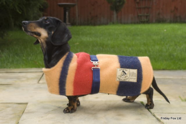 Witney Miniature Dachshund Coat